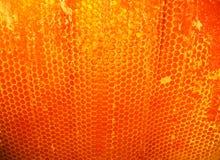 蜂蜜 免版税图库摄影