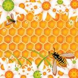 蜂蜜 皇族释放例证