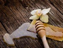 蜂蜡花蜂蜜 免版税图库摄影