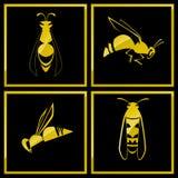 蜂象 库存图片