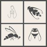 蜂象 免版税库存图片
