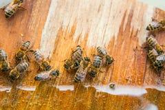 蜂饮用水在夏天 库存照片