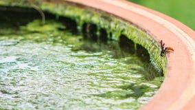 黄蜂饮用水 库存照片