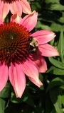 蜂饲养时间 免版税图库摄影