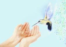 蜂鸟和手 当代绘画 背景 免版税库存照片