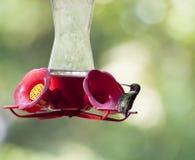 蜂鸟哺养 免版税库存照片