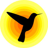 蜂鸟符号 免版税库存图片