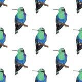 蜂鸟,无缝的样式 免版税库存照片