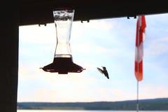 2蜂鸟 免版税库存照片