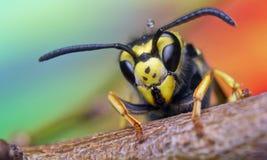 蜂,交换,蜂蜜,背景花昆虫 库存照片