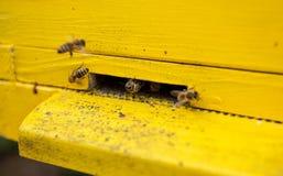蜂黄色蜂房  库存照片