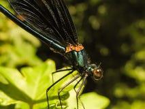 蜻蜓休息 图库摄影