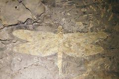 蜻蜓化石 免版税库存照片