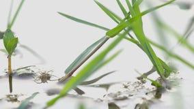 蜻蜓和蜘蛛攻击 影视素材