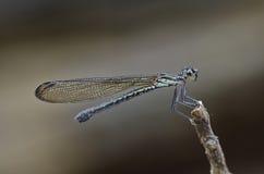 蜻蜓在公园 免版税库存图片