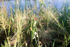 蜻蜓在早晨 免版税库存照片
