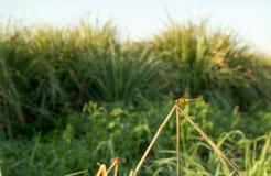 蜻蜓在早晨 库存照片