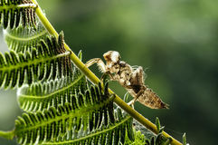 蜻蜓壳 图库摄影
