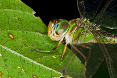 蜻蜓宏指令 图库摄影