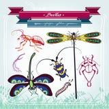 蜻蜓幼虫蚂蚁甲虫 库存照片