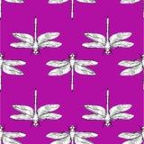 蜻蜓无缝的样式传染媒介手拉的例证 免版税库存图片