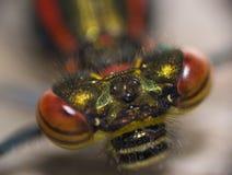 蜻蜓眼睛 免版税库存图片