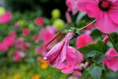 蜻蜓美丽的花颜色世界照片canon7d 免版税库存照片