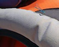蜻蜓-特写镜头 库存图片