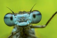 蜻蜓-画象 库存图片