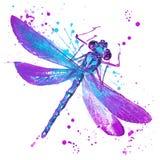 蜻蜓T恤杉图表,与飞溅w的蜻蜓例证 皇族释放例证