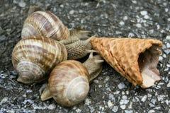 蜗牛三 库存图片