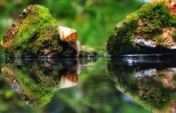 蜗牛世界 免版税库存图片