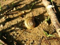 蜗牛关闭 库存图片