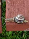 蜗牛冒险 库存图片