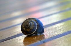 蜗牛准备好种族 图库摄影