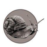 蜗牛剪影向量图形 图库摄影