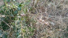 蜗牛吃草 很多蜗牛吃一棵植物 免版税库存照片