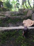 蜗牛和台阶 库存图片
