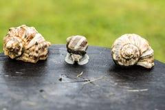 蜗牛和壳 库存照片