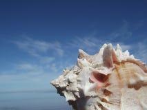 蜗牛和天空 免版税库存照片