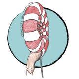 蜗牛和棒棒糖 库存照片