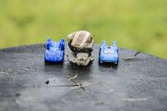 蜗牛和汽车 库存图片
