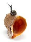 蜗牛和海扇壳 库存照片