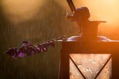 蜗牛和淡紫色在日落的一个灯笼开花 概念:镇定,放松,疗法,温泉背景 库存照片
