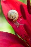 蜗牛和红色百合花 图库摄影