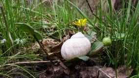 蜗牛和花 免版税库存图片