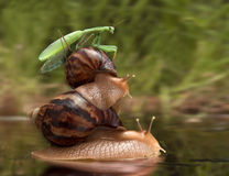蜗牛和螳螂 免版税库存图片