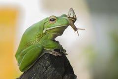 蜗牛和青蛙 免版税图库摄影