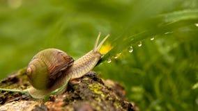 蜗牛和水下落 库存图片