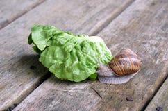 蜗牛和绿色叶子在木板走道 免版税库存图片